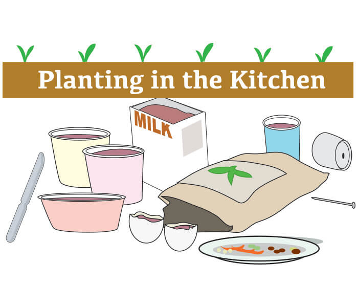Planting in the Kitchen