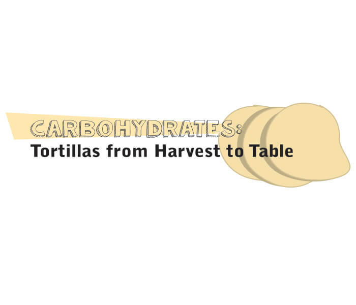 Carbohydrates: From Harvest to Table